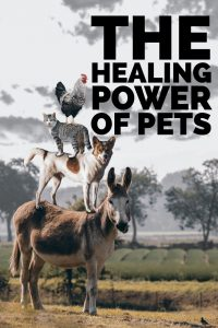 The Healing Power of Pets. Whether you are disabled, have PTSD or just need a loving friend, Pets can have the power to heal.