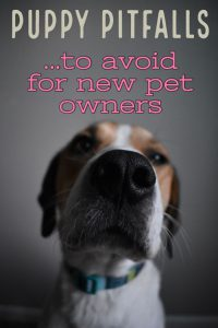 Puppy Pitfalls to Avoid for New Pet Owners. Everything you NEED to know.